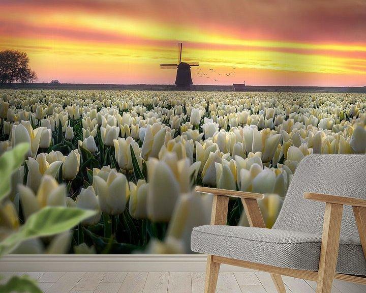 Beispiel fototapete: Holländische Tulpe Sonnenaufgang von Costas Ganasos