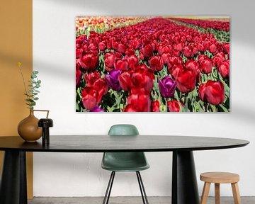 Tulpenfeld von Hélène Wiesenhaan