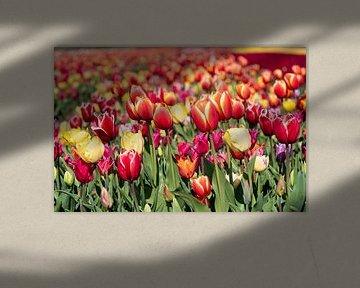 Farbige Tulpen in der Zwiebelregion von Hélène Wiesenhaan