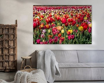 Tulpen in der Zwiebelregion von Hélène Wiesenhaan