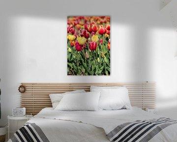 farbige Tulpen von Hélène Wiesenhaan