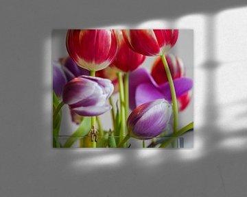Herr Jan in der Tulpenwelt von Hélène Wiesenhaan