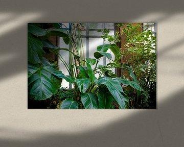Bildschirmhintergrund Tropical-2 von Veerle Van den Langenbergh