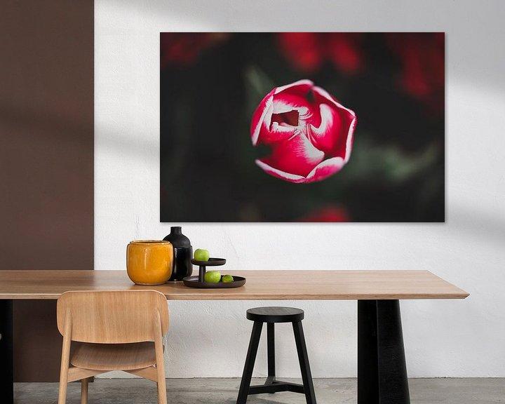 Sfeerimpressie: Rode bloeiende tulp van Fotografiecor .nl