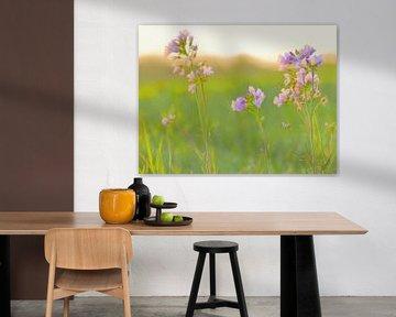 Weißland (Pfingstblumen) von Caroline Lichthart