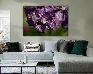 Purpurne Orchidee von MM Imageworks