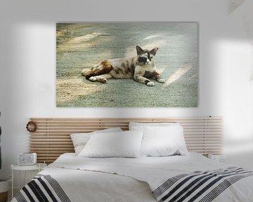 Katze in der Sonne von MM Imageworks