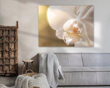 Blume Orchidee Weiß Gelb Nahaufnahme Makro von Art By Dominic