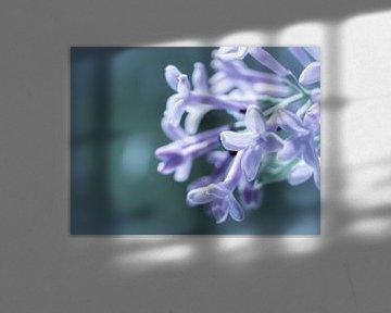 Blume Blauviolett Nahaufnahme Makro von Art By Dominic