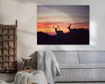 Foto van een drie herten tegen een zonsondergang in de duinen van Bram Jansen