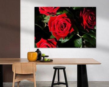 Rote Rosen von Nick van Dijk
