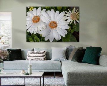 Fleurs sur Bas Groenendijk
