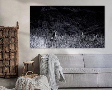 Der Hirsch findet seinen Weg in den schottischen Highlands von Studio de Waay