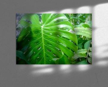 Fototapete Grüne Pflanzen von Veerle Van den Langenbergh