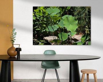 Bildschirmhintergrund Tropical-3 von Veerle Van den Langenbergh