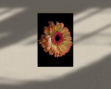 Gelbe Gerbera von Ilse Jansen