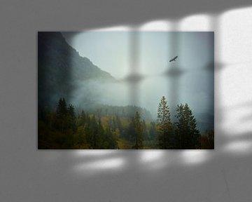 Een adelaar vliegt over het mistige bos van Anam Nàdar