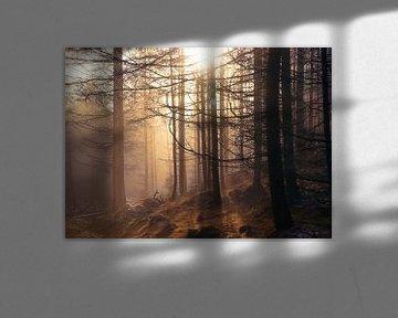 Zonsondergang in mistig bos van Anam Nàdar