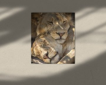 slapende leeuwen van Ed Dorrestein