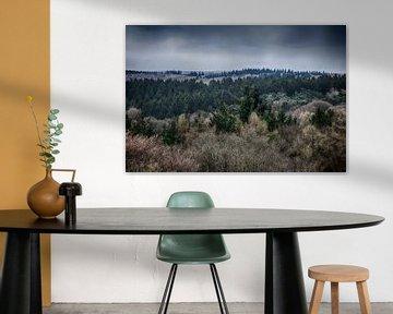 Limburgs boslandschap van MM Imageworks