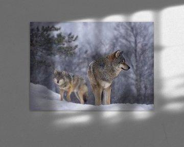 Wölfe im Schnee von Anam Nàdar