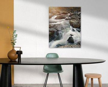 Der Rabe und der Wasserfall von Anam Nàdar