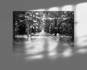 Einfahrt im Sonnenlicht von Chantal Koster