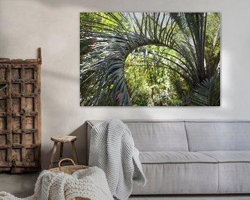Tapete - Tropisch 6 von Veerle Van den Langenbergh