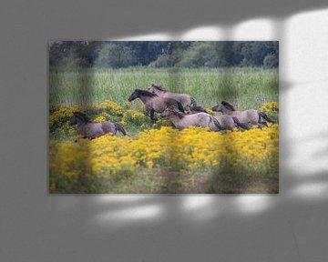 Wildpferde von Bas Groenendijk