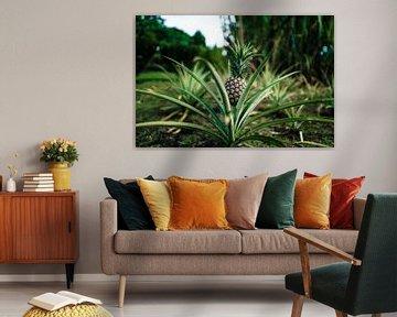 Hawaï-ananas van road to aloha