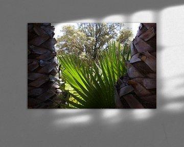 Wallpaper - Tropical 7 van Veerle Van den Langenbergh