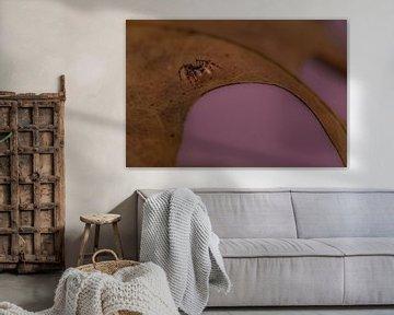 Springende Spinne mit rosa Hintergrund. von Erik de Rijk