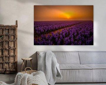 Purple sunrise van peterheinspictures