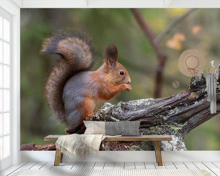 Beispiel fototapete: Eichhörnchen von Merijn Loch