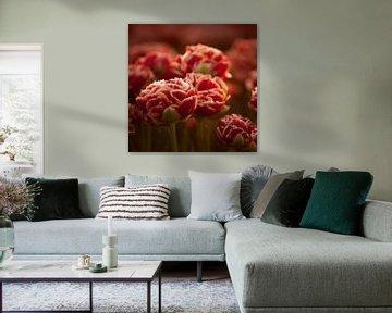 Holländische Tulpen rotes Quadrat von patricia petrick