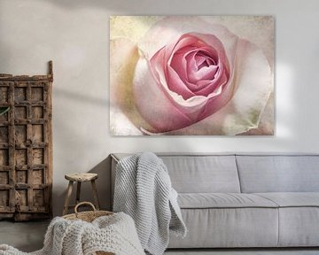 Rose von Corinna van der Ven