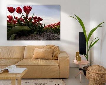 Die roten und weißen Tulpen im niederländischen Lehm von Studio de Waay