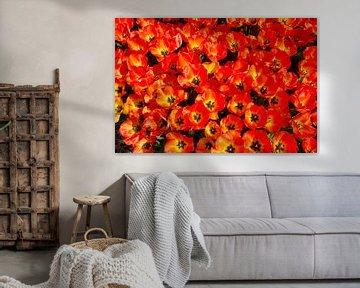 Blühende rote Tulpen von eric van der eijk