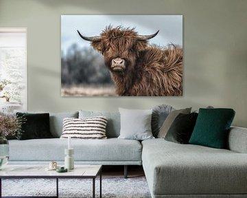 Schotse Hooglander koe close up. van Robin van Maanen