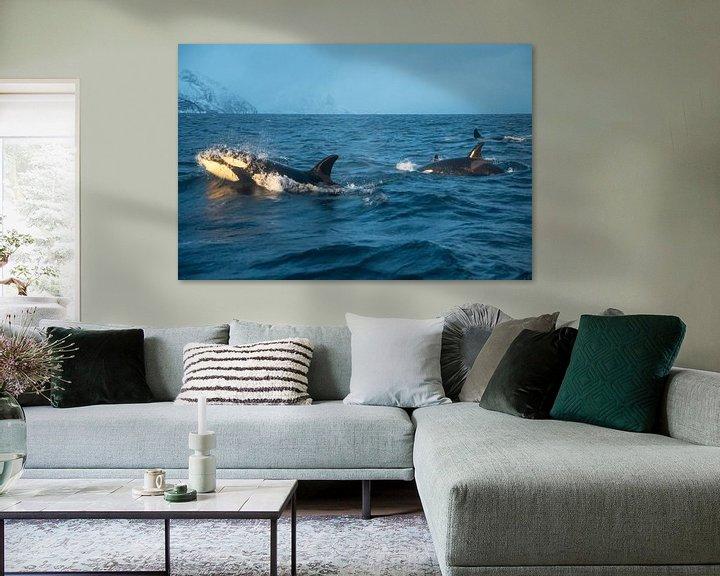 Beispiel: Orca von Merijn Loch