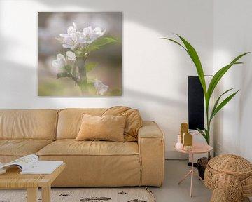 Bouquet de printemps avec des fleurs de pommier