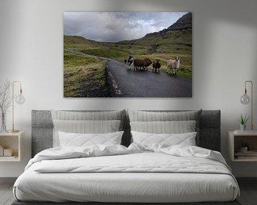 Les moutons des îles Féroé sur la route sur Robin van Maanen