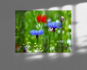 Kornblumen von Caroline Lichthart
