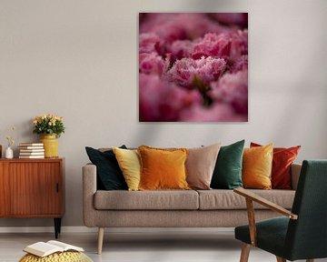 Tulipe rose, format carré sur patricia petrick