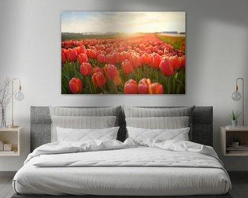 Champ de tulipes au coucher du soleil sur Ties van Veelen
