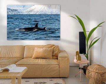 Orca mit Jungen von Merijn Loch