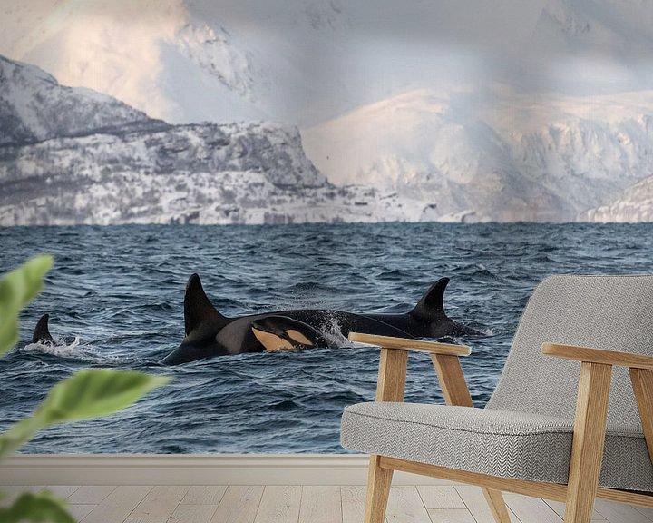 Beispiel fototapete: Orca von Merijn Loch