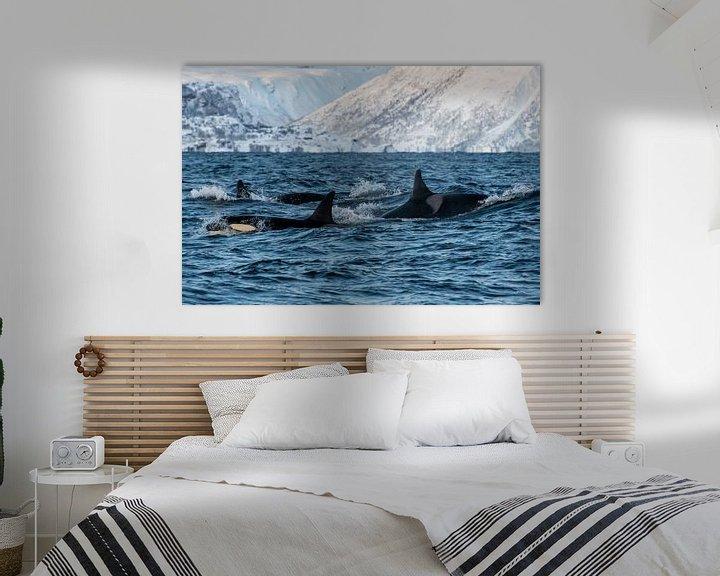 Beispiel: Gruppe von Orcas von Merijn Loch