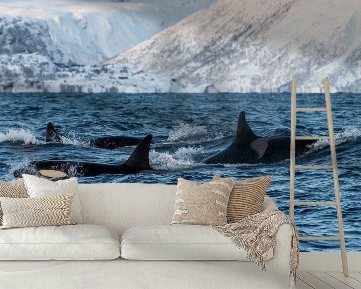Beispiel fototapete: Gruppe von Orcas von Merijn Loch