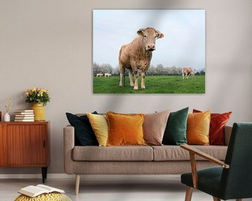 blonde d'aquitaine cows in spring landscape with blossoming trees near utrecht in the netherlands van anton havelaar